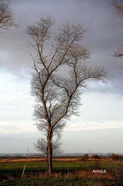 Calais December 2012 01 bassa
