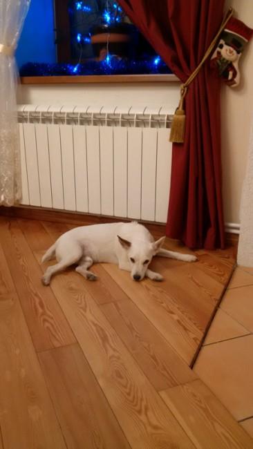 Le-chien-principal